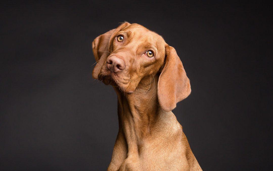 Kary za nieupilnowanie psa mogą sięgać nawet 5 tyś zł lub pozbawienie wolności!